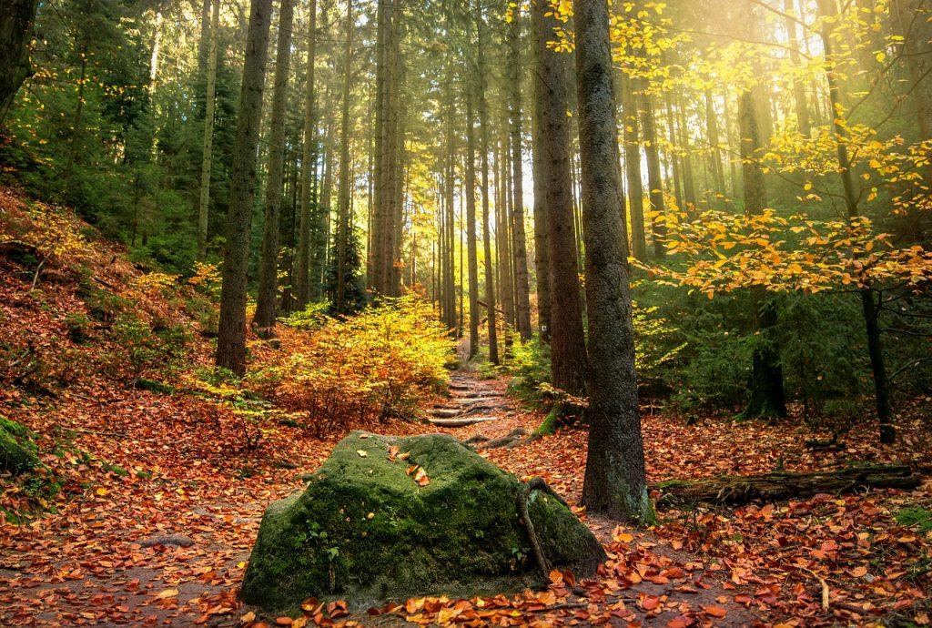 Elbstandsteingebirge im Herbst